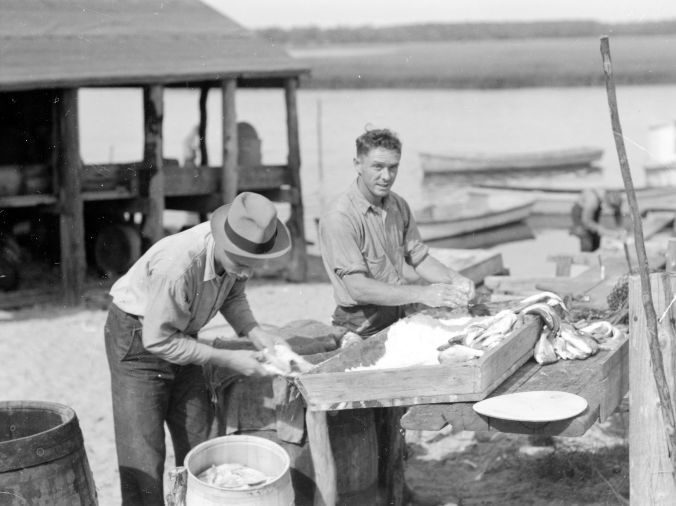 Salting fish, Brown's Island, N.C.