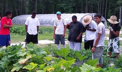 SFHA volunteers and N.C. A&T partnered to expand the group's community gardens.