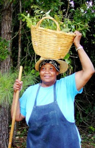 Ms. Mattie carrying a basket of salad greens. Courtesy, Sandhills Family Heritage Association