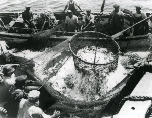 "Fishermen bailing menhaden (locally called ""pogie"" or ""shad"") out of their purse seine near Beaufort, N.C. ca. 1940."