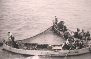 Menhaden fishermen at work, probably in the 1930s. Courtesy, Steve Goodwin, Beaufort, N.C.