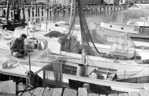 Shrimp trawlers at the docks and a fisherman mending net, Southport, N.C., late 1930s. In addition to the local shrimp fishermen, dozens of shrimpers from Carteret County also followed the shrimp to Southport every fall. Typically they lived on their boats and their catches to the local shrimp houses.
