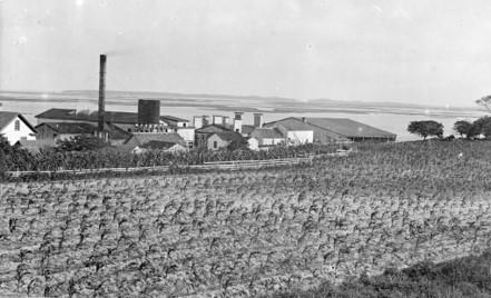 Swansboro Land and Lumber Co., ca. 1900.