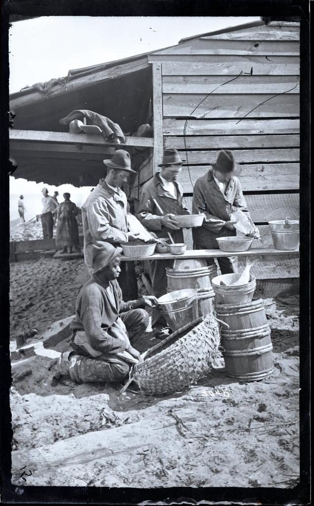 Sorting fish, Capehart family fishery (Sutton Beach), Albemarle Sound, N.C., ca. 1877.