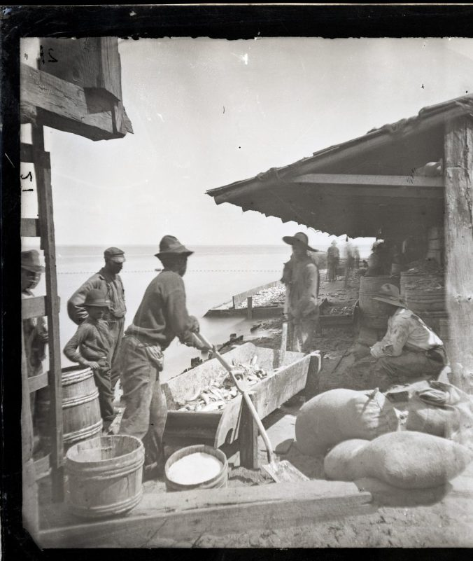 Avoca fishery, Albemarle Sound, ca. 1877. Young fishermen shoveling fish, perhaps mixing them with salt for the cooks in the fishery's kitchen. The regular salting would have taken place under the shelter and in much larger troughs. Courtesy, Smithsonian Institution Archives