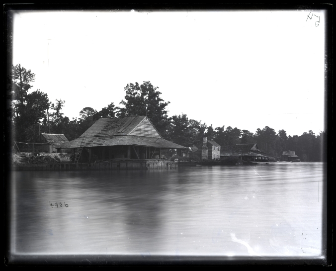 Avoca fishery (also called Sutton Beach), Merry Hill, N.C., ca. 1877. Courtesy, Smithsonian Institution Archives