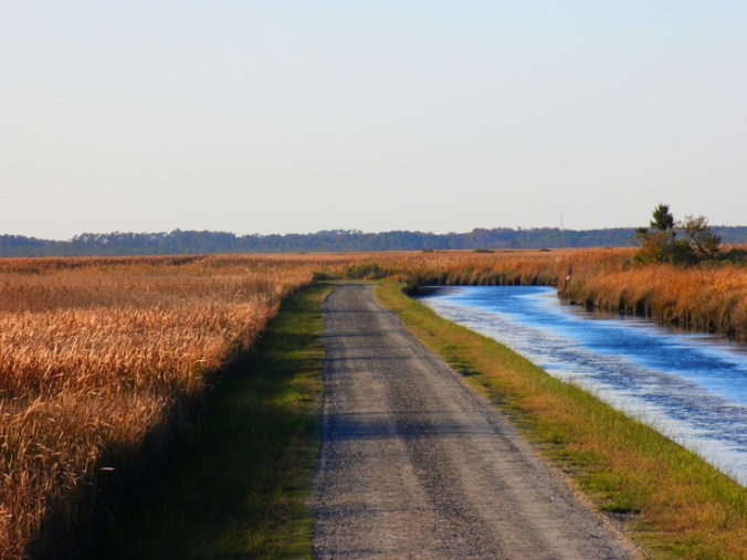 The Marsh Road onto Knotts Island from the north. A state ferry connects the island to Currituck, N.C.