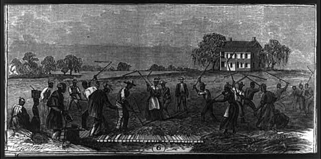 African American workers on a Cape Fear rice plantation, etching, date and artist unknown. Courtesy, Library of Congress