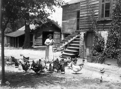 Farm woman and her flock in North Carolina, ca. 1890-1900. From the H. H. Brimley Collection, State Archives of North Carolina