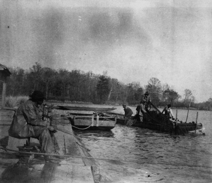 Seine fishery near Plymouth, N.C. From the NOAA Historic Fisheries Photograph Collection. Courtesy, the National Archives