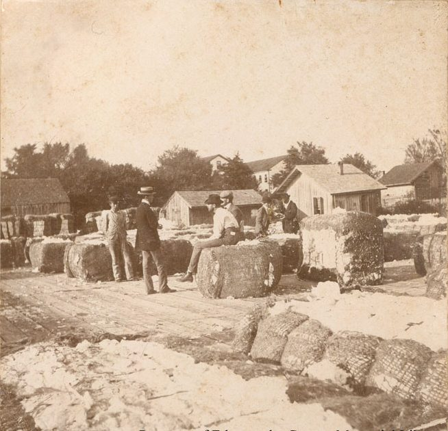 """A cotton yard, Tarboro, N.C. Under this photograph, Lena Martin wrote """"Our source of wealth."""" Courtesy, Edgecombe County Memorial Library"""