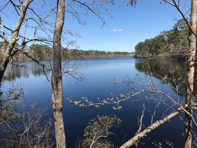 Walkers Millpond, Black Creek, SR 1154 (Mill Creek Rd.), Carteret County, N.C. Photo by David Cecelski