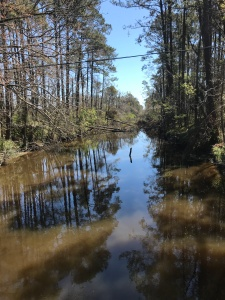 The Clubfoot Creek & Harlowe Creek Canal today. Trees taken down by hurricane Florence have yet to be cleared from the waterway. Photo by David Cecelski