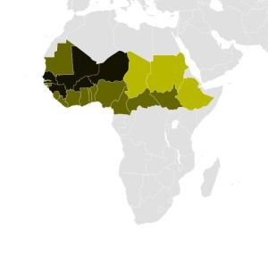 Distribution map of the Fula people in Africa. Black indicates the Fula are a major ethnic group; dark green, significant; light green, a minor ethnic group. An estimated 20-25 million Fula live in West Africa and the Sahel. Map by Ms. Sarah Welch, Wikipedia