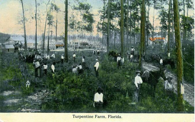 A turpentine glade and distillery in north Florida, early 20th century. Naval stores workers from North Carolina made up a large part of the workforce in many southern states during that time period. Post card image courtesy, Matheson History Museum, Gainesville, Florida
