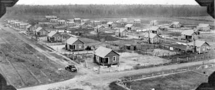 A turpentine camp in central Florida, ca. 1920. Courtesy, Florida Memory Project