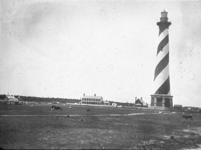 Cattle grazing in the shadow of the Cape Hatteras Lighthouse, Cape Hatteras, N.C., ca. 1900. Image by Albert Ross, USN. Courtesy, Linda Garey
