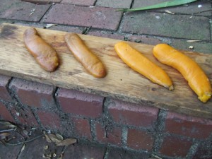 Drying mullet roe at my house. Photo by David Cecelski