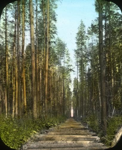 Photo by Clarence F. Korstian. Courtesy, Forest History Society