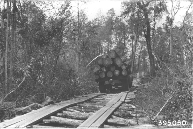 Photo by Walter H. Schaffer. Courtesy, Forest History Society