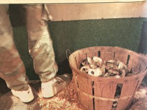 Shucker Floyd Spruill's pile of shells, Sunny Side Oyster Bar, Williamston, N.C. Photo by Roger Winstead. Courtesy, News & Observer.