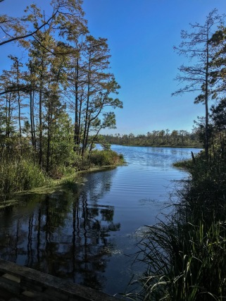 The waters around Mill Tail Creek are often very narrow passages through swamp forest but now and then open up into broad lakes. Courtesy, Thirdeyemom