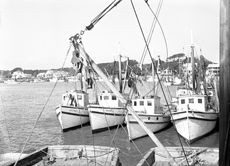 Part of the Wells' brothers shrimp fleet, Southport, N.C., 1938. Photo by Charles Farrell. Courtesy, State Archives of North Carolina.