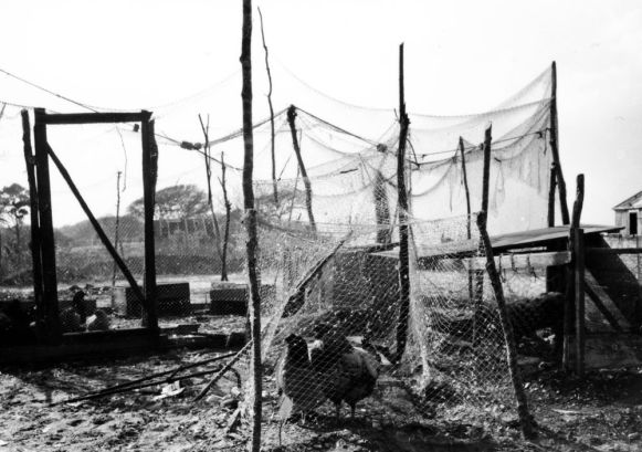 Salter Path, N.C., ca. 1937-40. Fishermen often used their old nets to build chicken coops and garden fences. Photo by Charles A. Farrell. Courtesy, State Archives of North Carolina