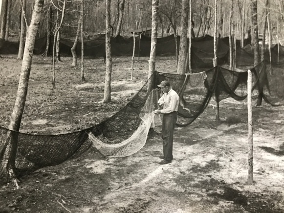 A fish camp on the Roanoke River, ca. 1940s-50s. Courtesy, Jack Dudley