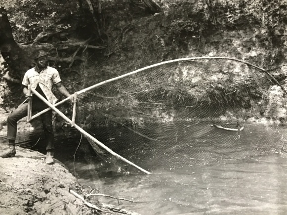 Man fishing for herring or shad with a handmade bow net on a creek apparently off the Roanoke River, probably in Martin County, N.C. in the 1950s. Courtesy, Jack Dudley