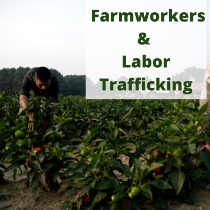 "You can learn more about human trafficking in North Carolina's agricultural industry today in Melinda Sampson's ""The Dark Side of Agriculture: Labor Trafficking in the Fields."" It's on the web site for North Carolina Stop Human Trafficking."