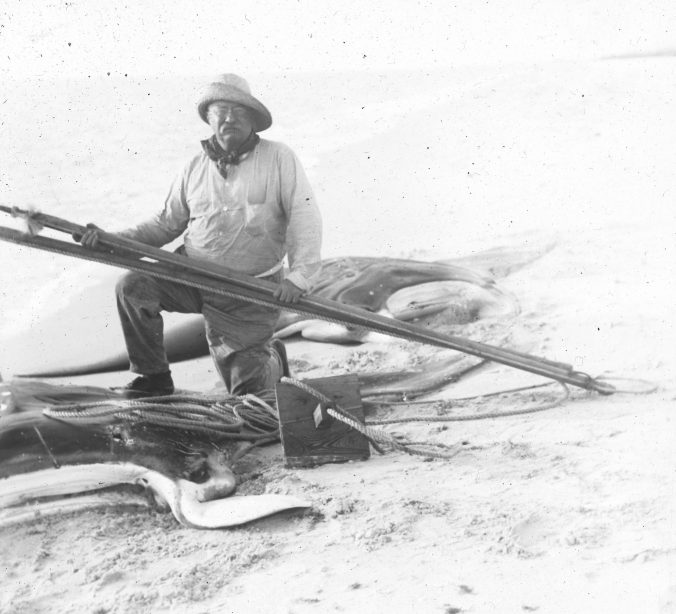 Roosevelt with the two giant manta rays, Captiva Island, Fl., 1917. Photo courtesy of Walter Coles, Sr., Chatham, Va.