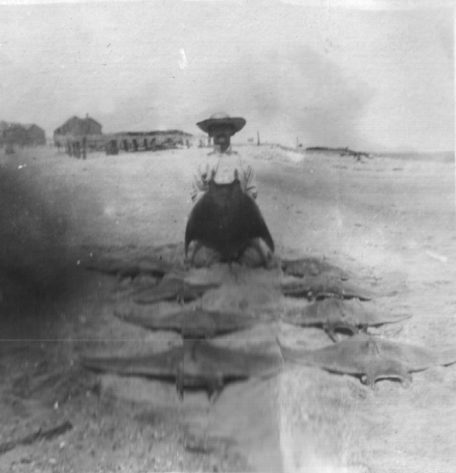 Coles with a group of 8 unidentified rays probably on the beach at the Promise Land in Morehead City ca. 1912-15. Photo courtesy of Walter Coles, Sr., Coles Hill, Va.