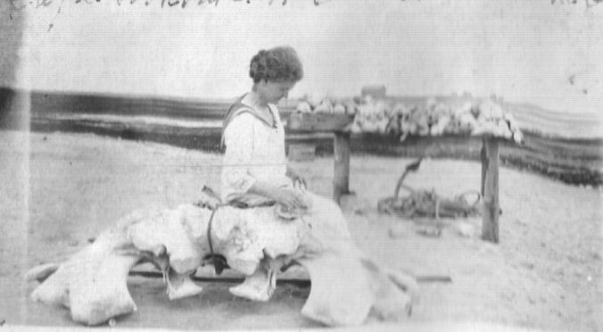 Mrs. Ambler again, this time seated on a whalebone on the beach at Cape Lookout, 1921. Photo, courtesy of Walter Coles, Sr., Chatham, Va.
