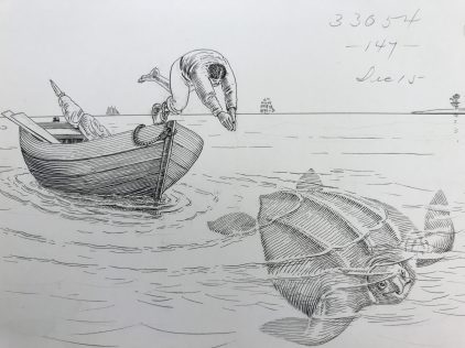 Loggerhead turtle hunting, Cape Lookout vicinity, 1883. Loggerheads are the world's largest hard shell turtle, typically weighing 180-440 lbs. At the time of this drawing, they were commonly hunted for their meat and eggs. Drawing by H. Elliott. From U.S. Fish Commission Records, Archives Center, National Museum of American History