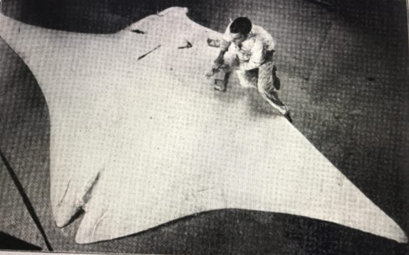 """Conservator J. C. Bell molding Coles' giant manta ray at the American Museum of Natural History. The ray measured 18 ft. from tip to tip of its fins. Rough plaster molds of the ray were made on the beach on the day it was killed, then sent to the museum in 12 sections. Bell put them together to make the cast. He has not yet attached the tail. From """"Fighting the Terrible Devilfish,"""" Popular Science Monthly 20, #4 (April 1917)."""