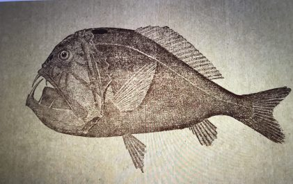 "Louis Hussakof led the American Museum of Natural History's first expedition for fossil fish in 1907-08 and also had a long-time interest in deep-sea fish. From Louis Hussakof, ""Fishes of the Deep Sea,"" <em>American Museum Journal</em> XI (1915), 248-253."