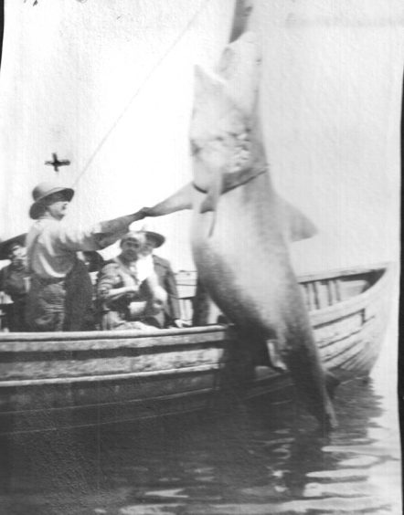 Russell Coles (standing) a a great white shark near Cape Lookout, July 28, 1920. Courtesy, Walter Coles, Sr.