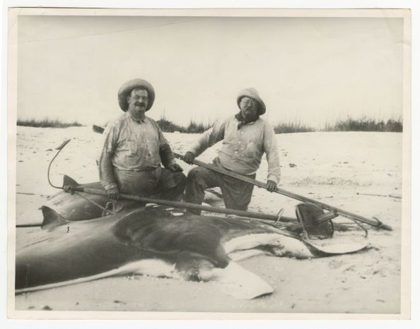 Russell Coles and Teddy Roosevelt with the carcass of a giant oceanic manta ray on Captiva Island, Florida, in 1917. Courtesy, Walter Coles, Sr., Chatham, Va.