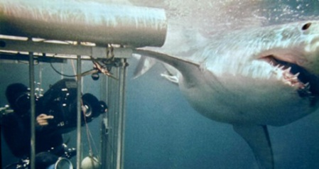 When my cousin Peter Lake swims with great white sharks, he at least uses a cage. This is Peter in the 1971 documentary film Blue Water, White Death. Courtesy, Park Circus.