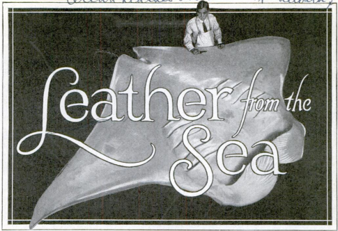 The Ocean Leather Co. dealt primarily in shark leather, but also experimented with the use of the skins of dolphins, rays and other sea animals as leather. From Popular Mechanics, February 1928.