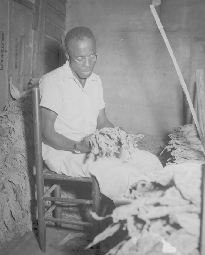 Woman sorting cured tobacco by the color of their leaves, getting them ready to be taken to market, 1950s. Courtesy, Joyner Library, ECU