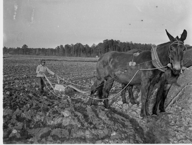 A very young man plowing field with a horse-drawn plow, 1949. Courtesy, Joyner Library, ECU