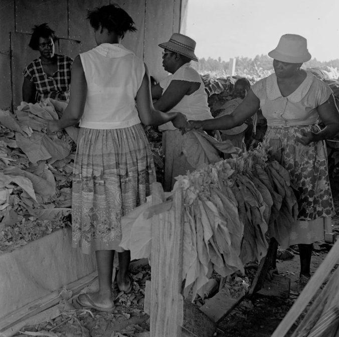 Women handing and looping tobacco. Courtesy, Joyner Library, ECU