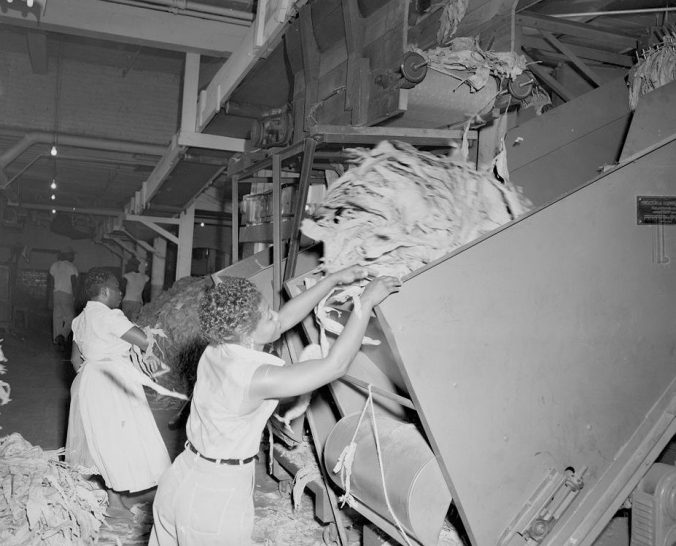 Women loading tobacco into hoppers at the E. B. Ficklen Tobacco Co., 1955. Courtesy, Joyner Library, ECU