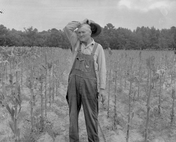 Farmer in his harvested tobacco field, 1957. Courtesy, Joyner Library, ECU