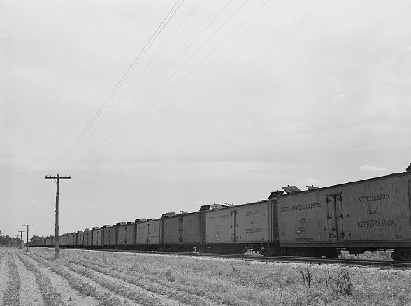 Freight cars waited to be loaded with potatoes, Camden, N.C., 1940. Photo by Jack Delano. Courtesy, Library of Congress