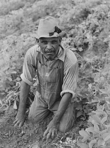 Picking potatoes at a farm in Belcross, N.C., 1940. Photo by Jack Delano. Courtesy, Library of Congress