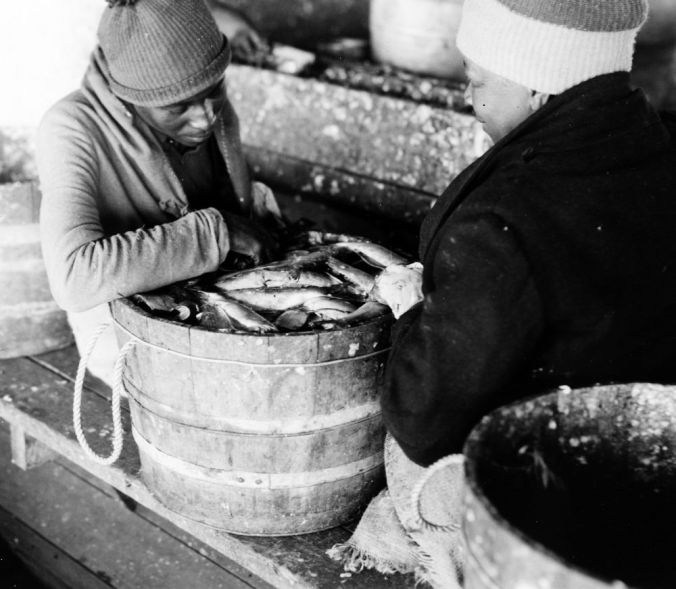 Perry-Belch herring fishery, Colerain, N.C., ca. 1937-41. Photo by Charles A. Farrell. Courtesy, State Archives of North Carolina