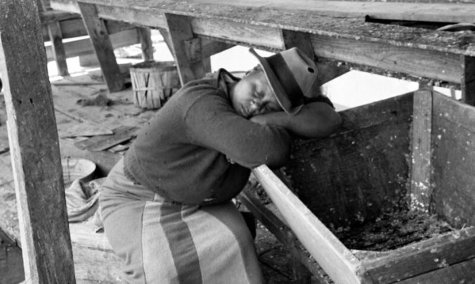 Herring worker, probably at Terrapin Point near Merry Hill (Bertie County), N.C., ca. 1937-39. In between hauls, the women sometimes got a chance to take catnaps. Many fisheries ran day and night. Photo by Charles A. Farrell. Courtesy, State Archives of North Carolina
